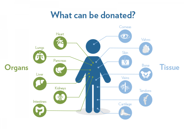 what organs and tissue can be donated transplanted